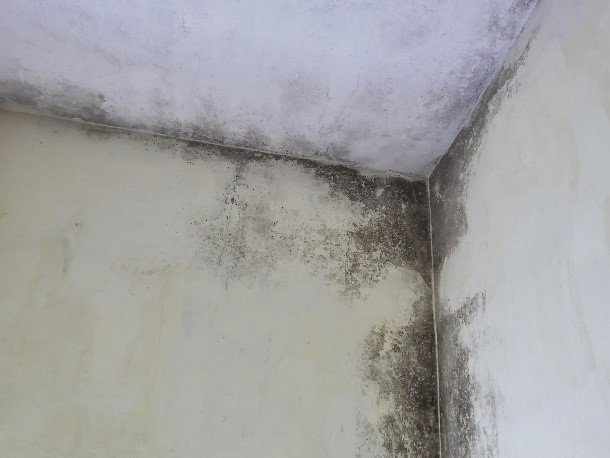 mould decontamination australia